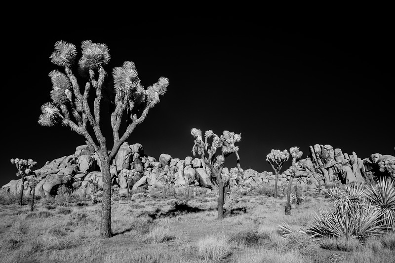 JoshuaTreeIR-005