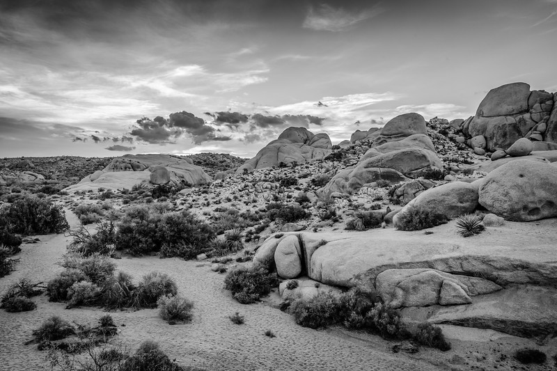 JoshuaTree2014-01-Edit