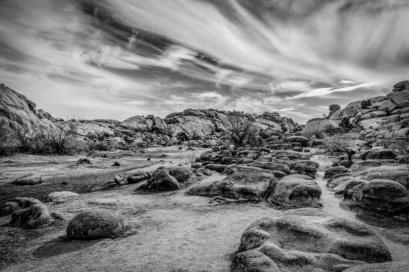 JoshuaTree2016-023-Edit