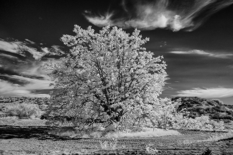 Infrared2014-0023-Edit