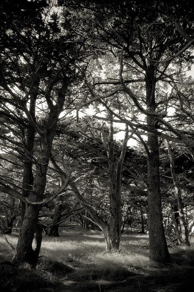 Monterey 2006-242