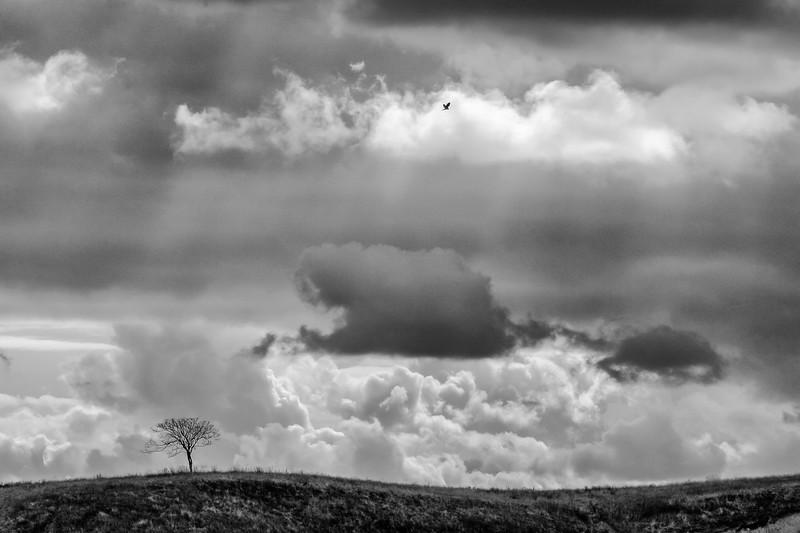 Landscapes-004-Edit