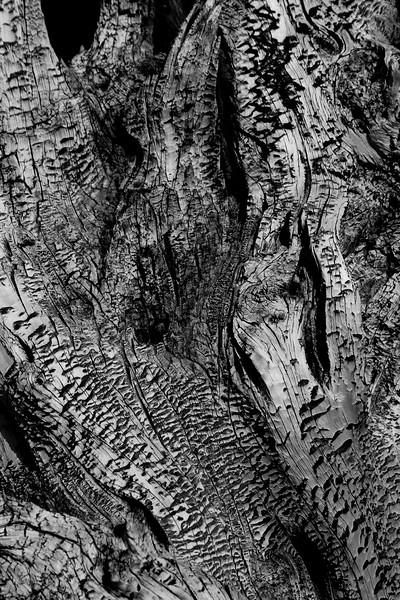 Yosemite 2005-030