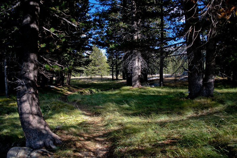 Tuolumne Meadow