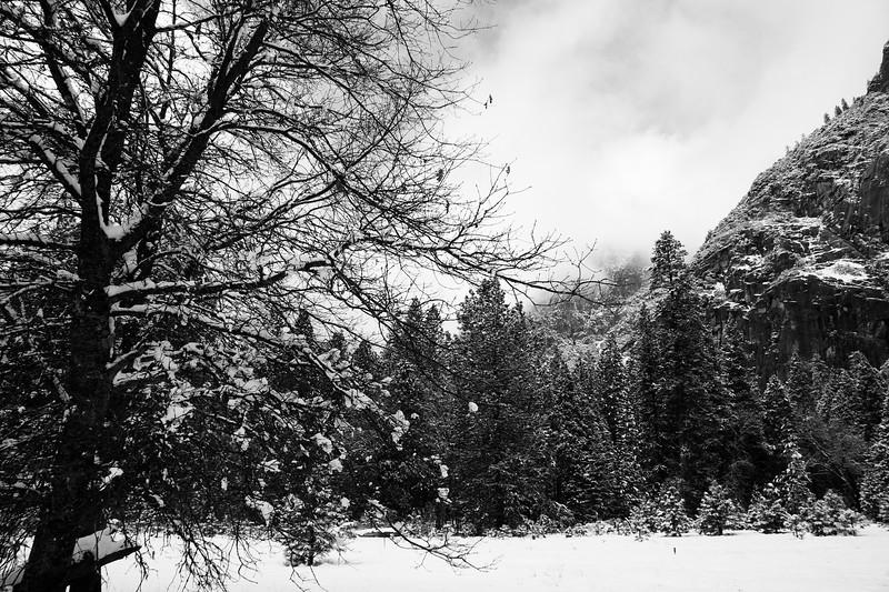 Yosemite 2006-133