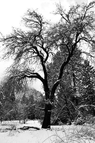 Yosemite 2006-127