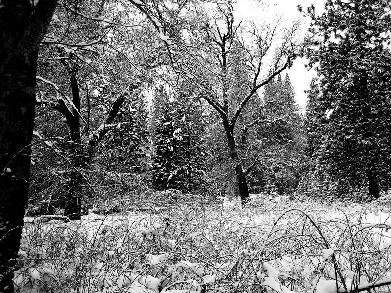 Yosemite 2006-120