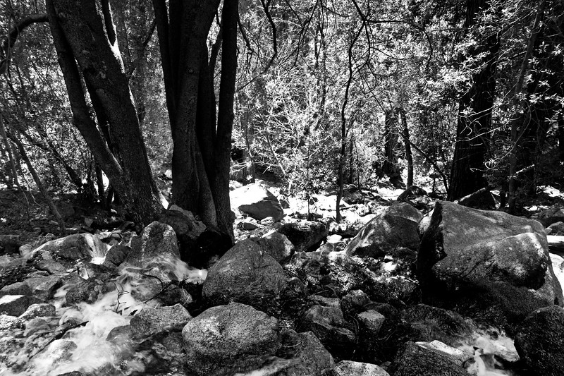 YosemiteApril2009-178