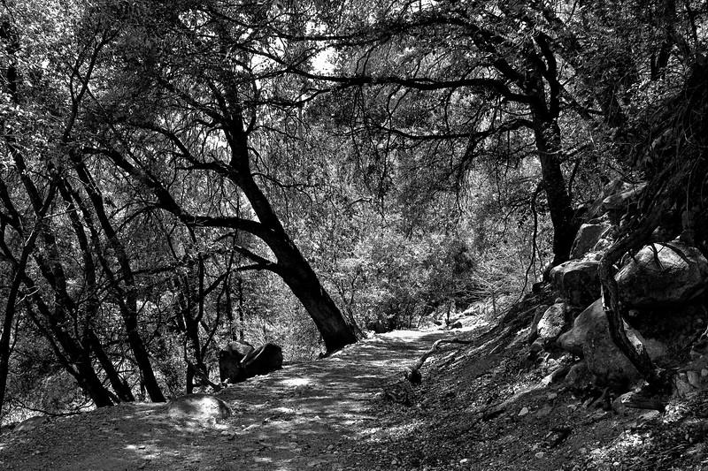 YosemiteApril2009-314