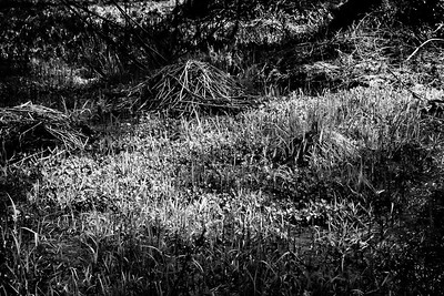 YosemiteApril2009-065