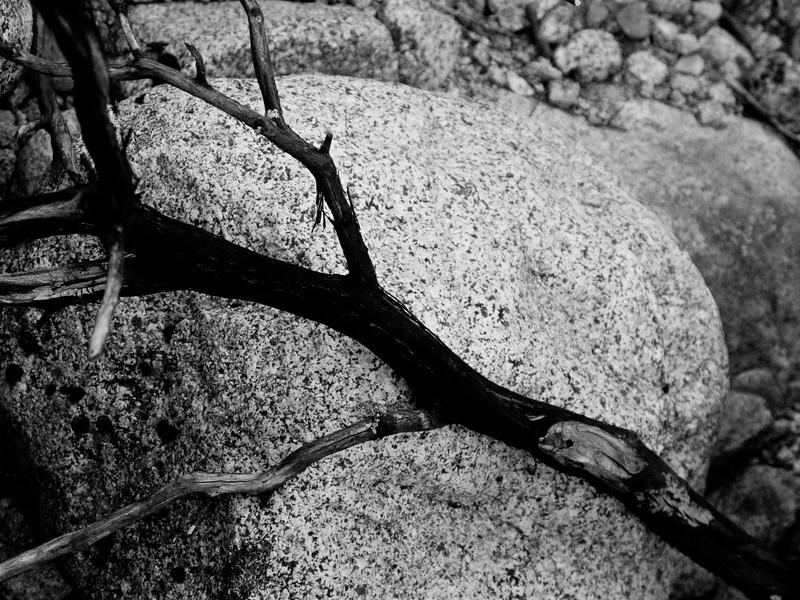 YosemiteApril2009-102