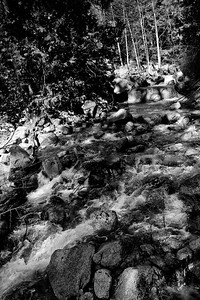 YosemiteApril2009-036
