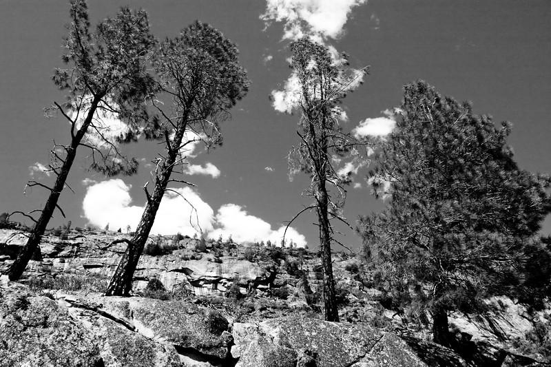 YosemiteApril2009-334