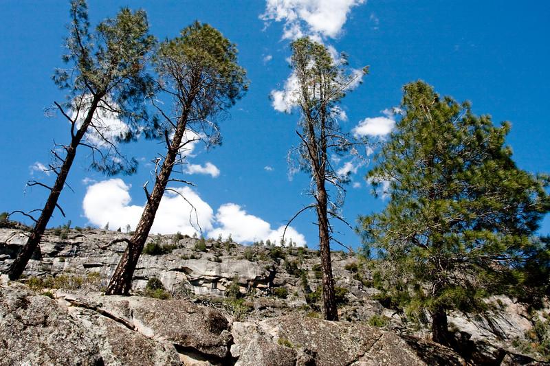 YosemiteApril2009-335