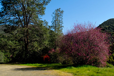 YosemiteApril2009-004