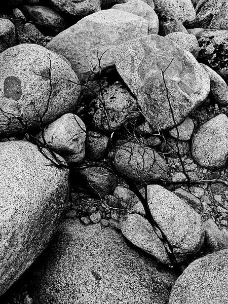 YosemiteApril2009-097
