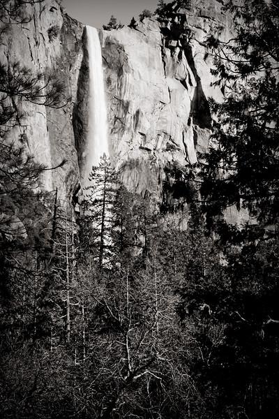 YosemiteApril2009-012