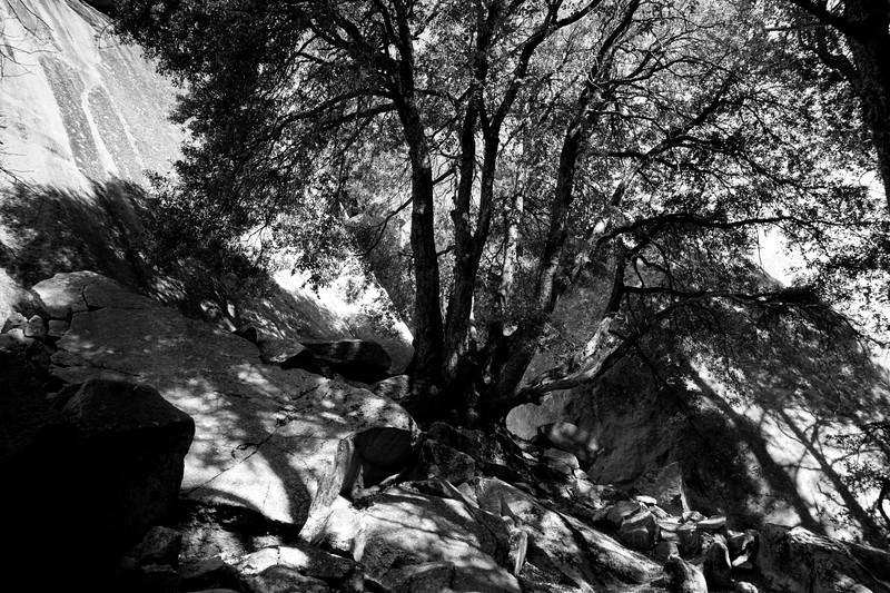 YosemiteApril2009-165
