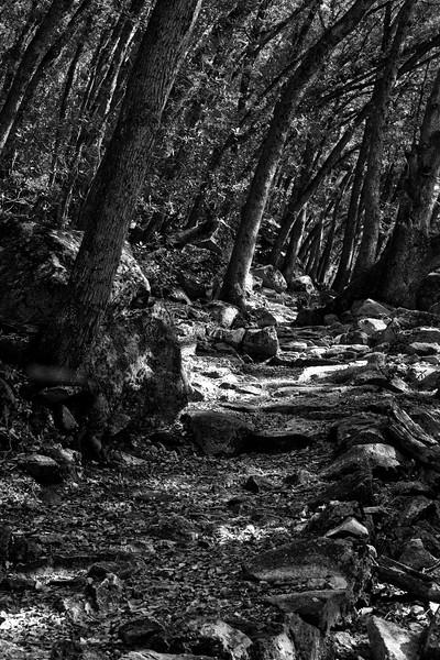 Yosemite2010Feb(A)-165
