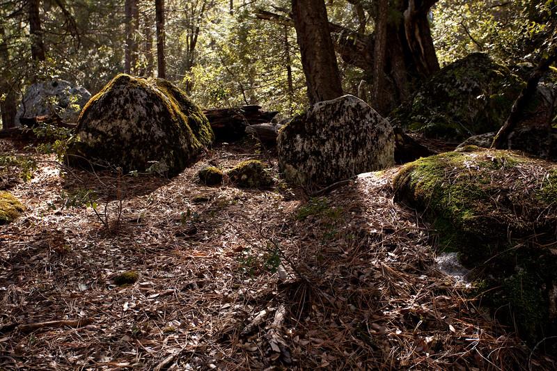 Yosemite2010Feb-238