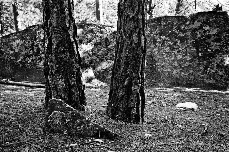 Yosemite2010Feb(A)-256