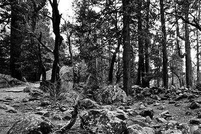 Yosemite2010Feb(A)-015