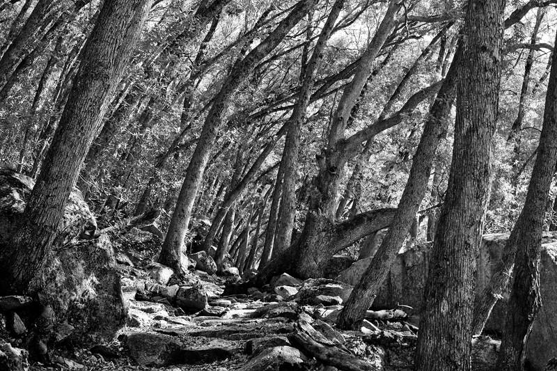 Yosemite2010Feb(A)-169