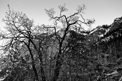 Yosemite2010Feb(A)-003