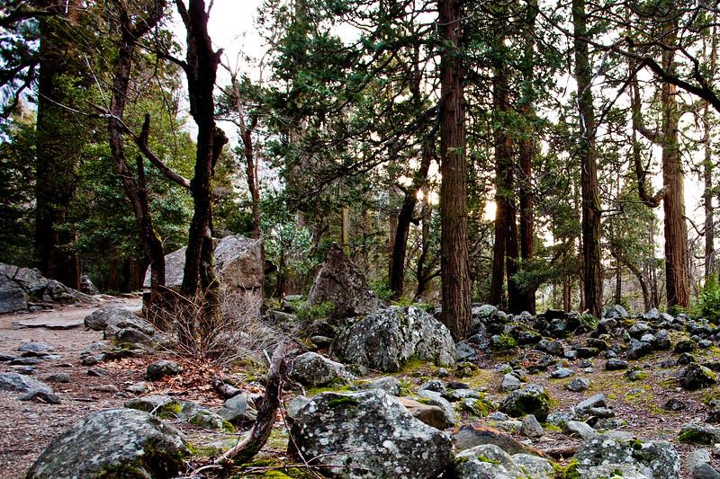 Yosemite2010Feb-016