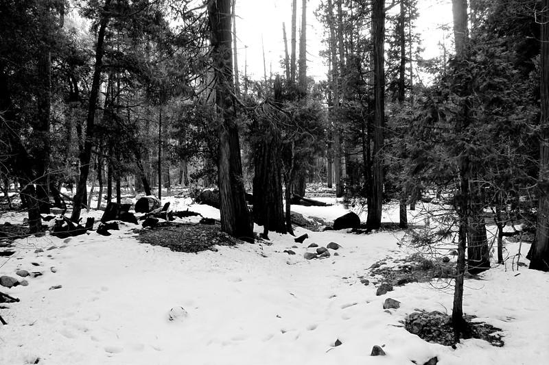 Yosemite2010Feb(A)-372