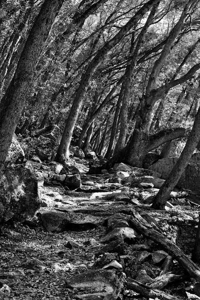 Yosemite2010Feb(A)-167