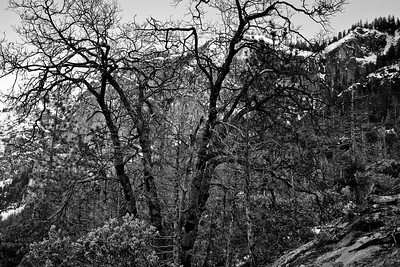 Yosemite2010Feb(A)-005