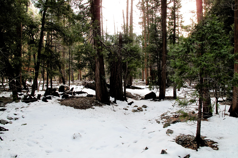 Yosemite2010Feb-373