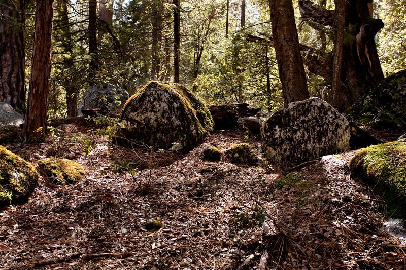 Yosemite2010Feb-236