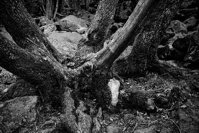 Yosemite2010Feb(A)-021