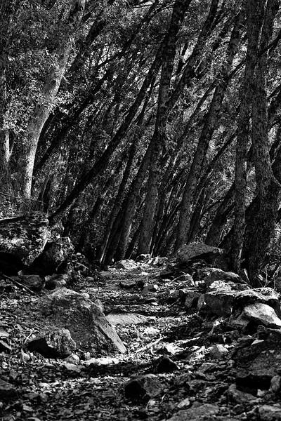 Yosemite2010Feb(A)-159