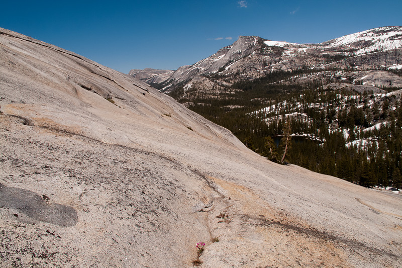 Yosemite2011June-063