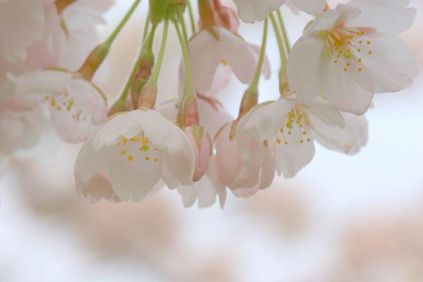 Bloemen besloten deel