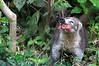 Belize Zoo 2011-10-07 - 12-51-23