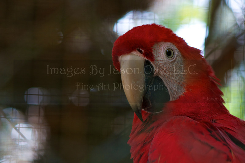 Belize Zoo 2011-10-07 - 13-07-02