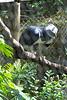 Belize Zoo 2011-10-07 - 12-53-37