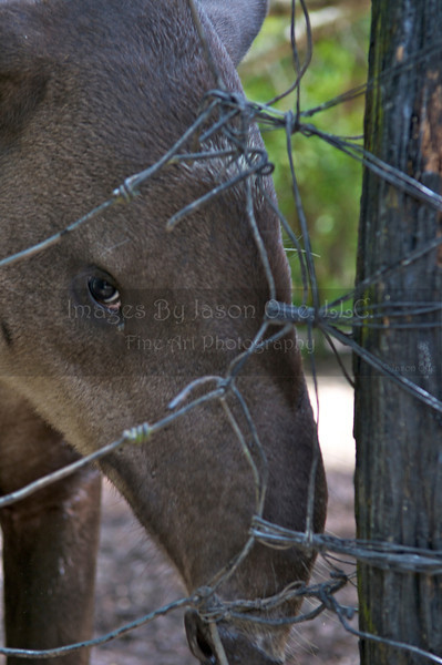 Belize Zoo 2011-10-07 - 11-59-29