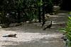 Belize Zoo 2011-10-07 - 12-14-38
