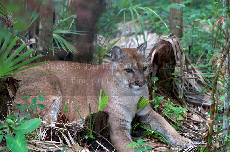 Belize Zoo 2011-10-07 - 12-31-18