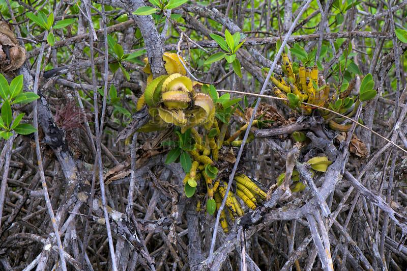 Lamanai 2011-10-05 - 09-52-26