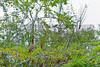 Lamanai 2011-10-05 - 12-29-26