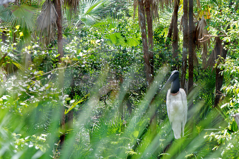Belize Zoo 2011-10-07 - 13-12-25