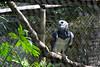 Belize Zoo 2011-10-07 - 12-53-51