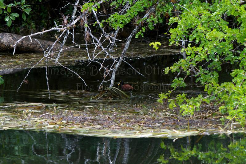 Lamanai 2011-10-05 - 12-32-20