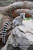 Bronx Zoo, September 14, 2008